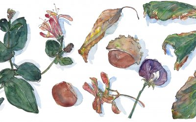 Nature Walks and Art – Emma Leyfield